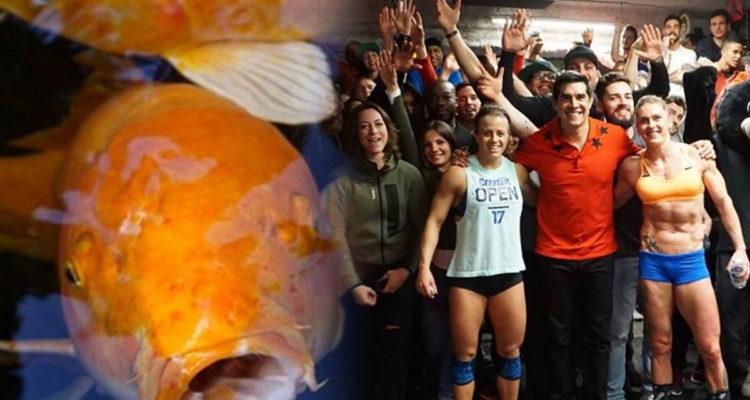 Dave Castro Fish 17.2